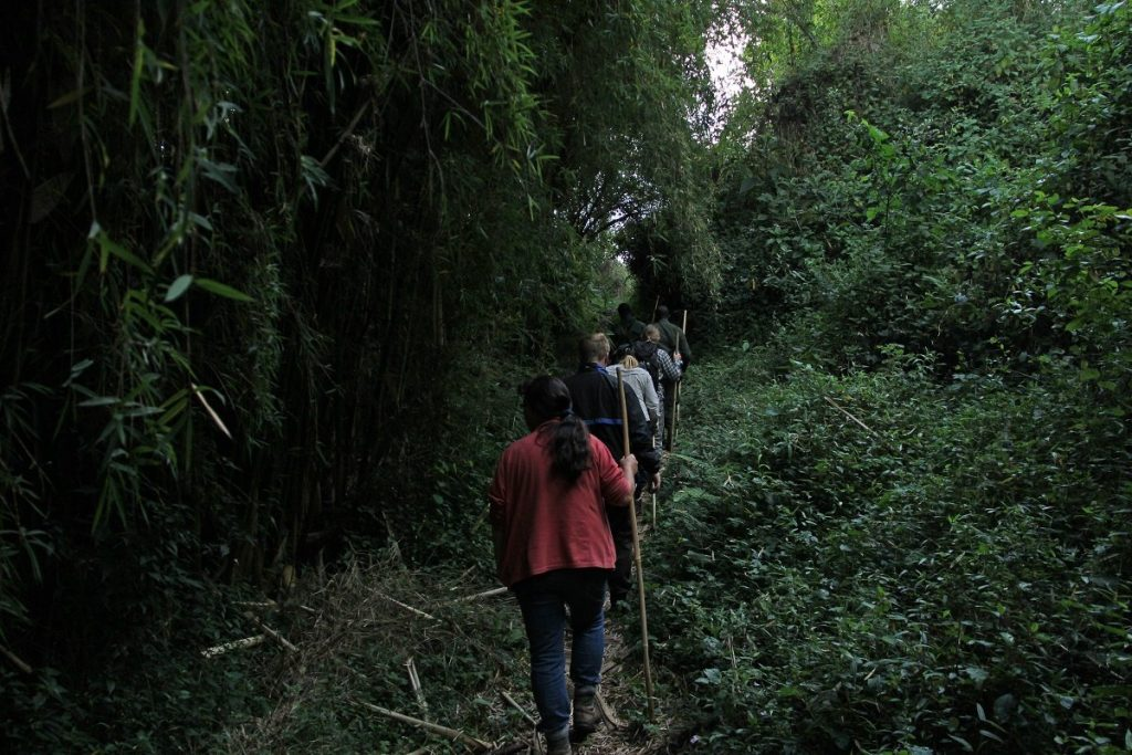 best time to visit mgahinga gorilla national park