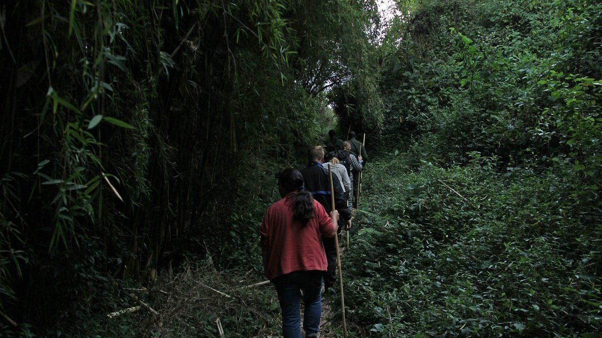 Nature walks in Uganda - River Munyaga Falls