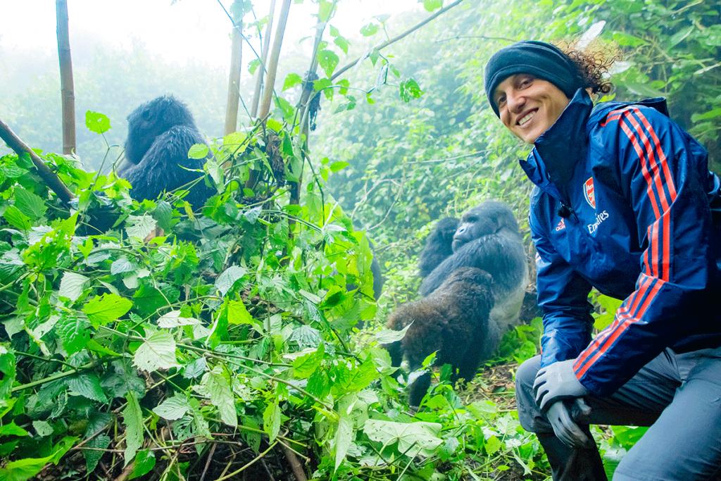 Mountain Gorilla Experience
