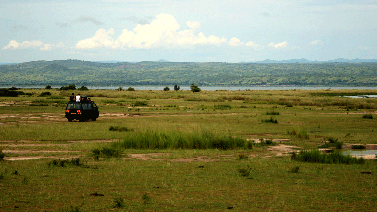Game viewing in Uganda - Tailor-made Safaris